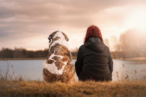 寵物領養APP開發意義—晉豐科技