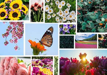 種花管理APP開發找晉豐科技