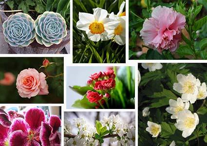 種花管理類APP開發--晉豐科技